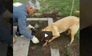 Cachorro Jardineiro