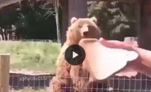 Urso acenando para turistas