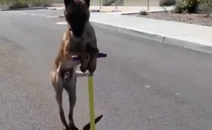 Cachorro andando de patinete