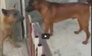 Como são os cachorros na rua